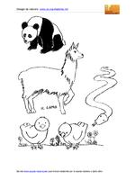 Animali-vari 05