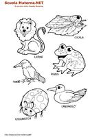 Animali Vari 03