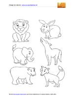 Animali Vari 09