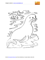 Animali Marini Elefanti Marini