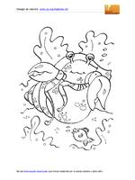 Animali Marini Paguro