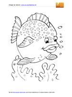 Animali Marini Pesce Palla