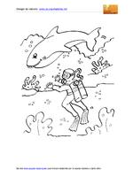 Animali Marini Squalo Sommozzatore