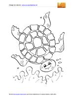 Animali Marini Tartaruga