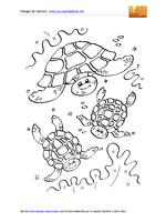 Animali Marini Tartarughe