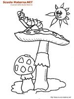Funghi Con Bruco