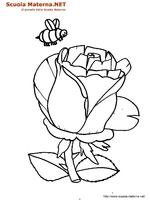 Rosa 01