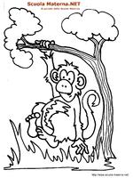 Scimmia Appesa
