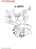 Gatto Sul Ramo